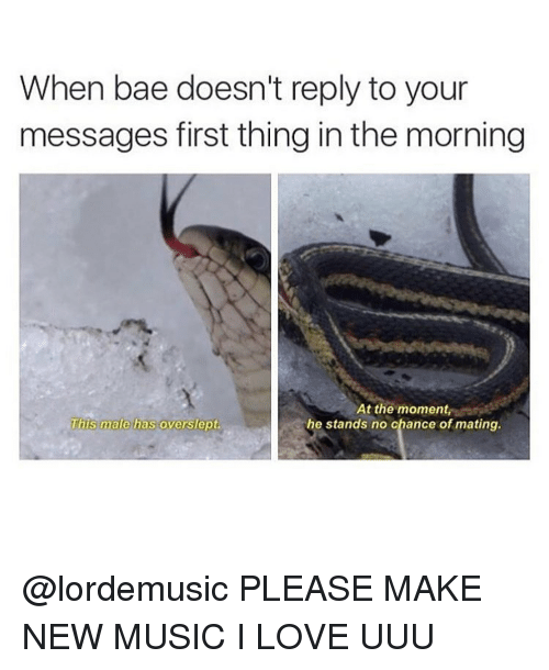 First, Make, and Thing: When bae doesn't reply to your  messages first thing inthe morning  At the moment  This male has overslept.  he stands no chance of mating. @lordemusic PLEASE MAKE NEW MUSIC I LOVE UUU