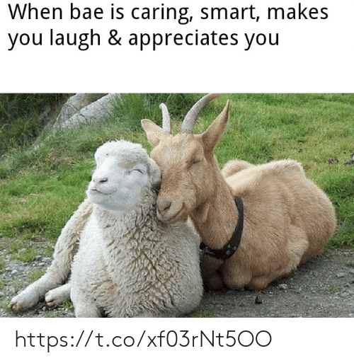 Bae: When bae is caring, smart, makes  you laugh & appreciates you https://t.co/xf03rNt5OO