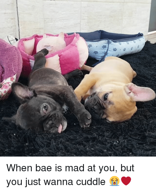When Bae Is Mad At You: When bae is mad at you, but you just wanna cuddle 😭❤