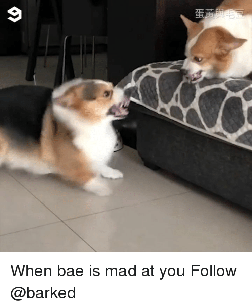When Bae Is Mad At You: When bae is mad at you Follow @barked