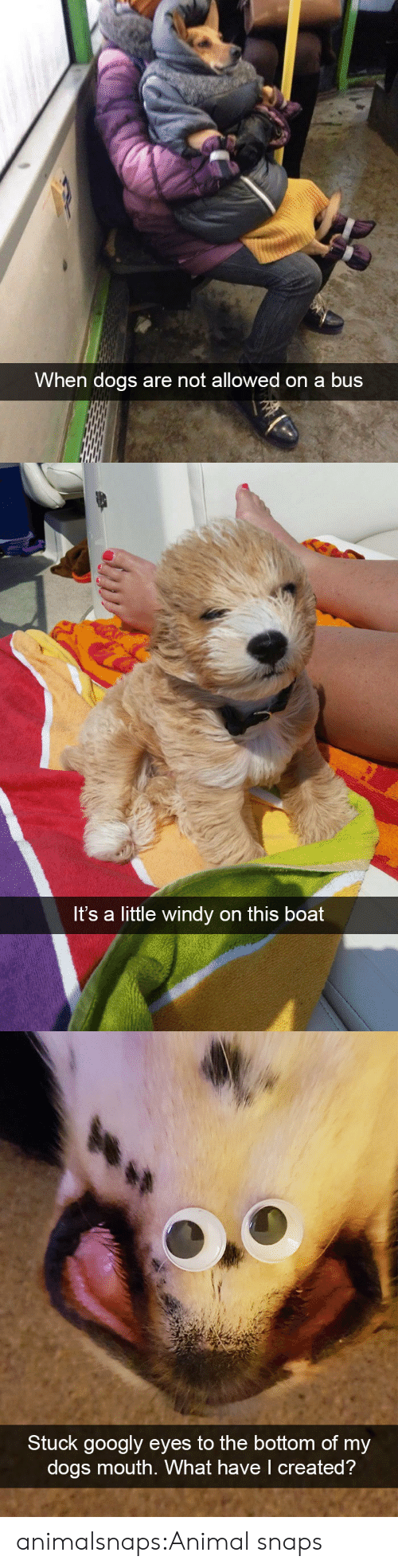 Dogs, Target, and Tumblr: When dogs are not allowed on a bus   Its a little windy on this boat   Stuck googly eyes to the bottom of my  dogs mouth. What have I created? animalsnaps:Animal snaps