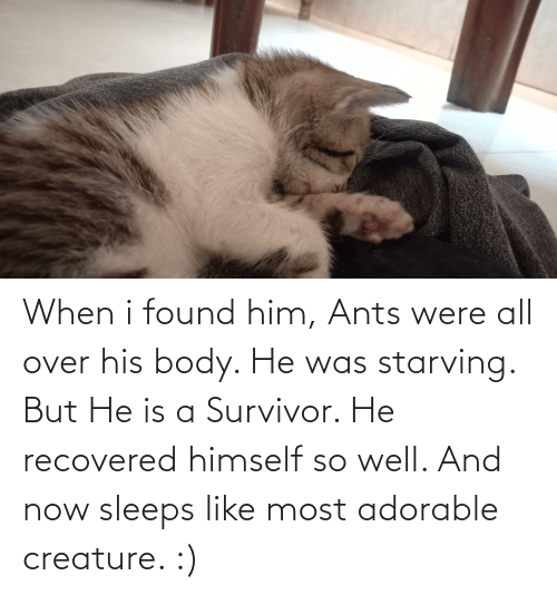 creature: When i found him, Ants were all over his body. He was starving. But He is a Survivor. He recovered himself so well. And now sleeps like most adorable creature. :)