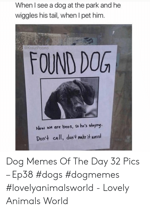Animals, Dogs, and Memes: When I see a dog at the park and he  wiggles his tail, when I pet him.  @KrautPotato  FOUND DOG  Now we are bros, so he's staying.  Dont call, don't make itw Dog Memes Of The Day 32 Pics – Ep38 #dogs #dogmemes #lovelyanimalsworld - Lovely Animals World