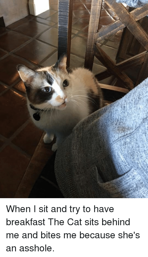 Assholism: When I sit and try to have breakfast The Cat sits behind me and bites me because she's an asshole.