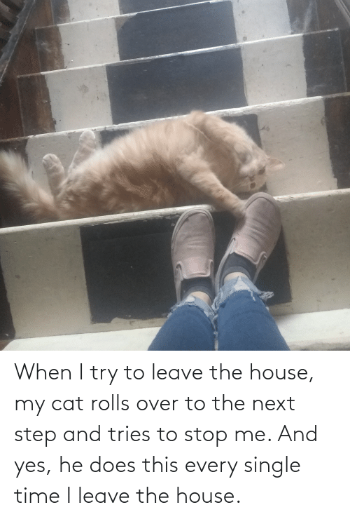 the next step: When I try to leave the house, my cat rolls over to the next step and tries to stop me. And yes, he does this every single time I leave the house.