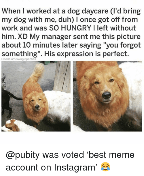 "10 Minutes Later: When I worked at a dog daycare (I'd bring  my dog with me, duh) I once got off from  work and was SO HUNGRY I left without  him. XD My manager sent me this picture  about 10 minutes later saying ""you forgot  something"". His expression is perfect  Reddit u/powergirlpantie @pubity was voted 'best meme account on Instagram' 😂"