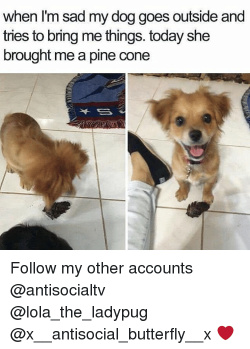 Coneing: when I'm sad my dog goes outside and  tries to bring me things. today she  brought me a pine cone Follow my other accounts @antisocialtv @lola_the_ladypug @x__antisocial_butterfly__x ❤️