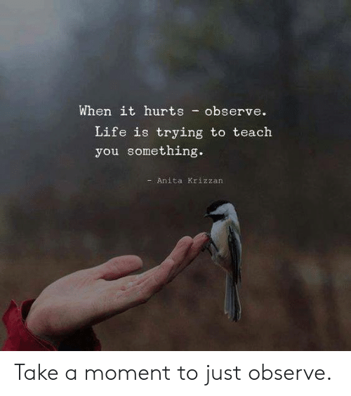 Anita: When it hurts observe.  Life is trying to teach  you something.  -Anita Krizzan Take a moment to just observe.