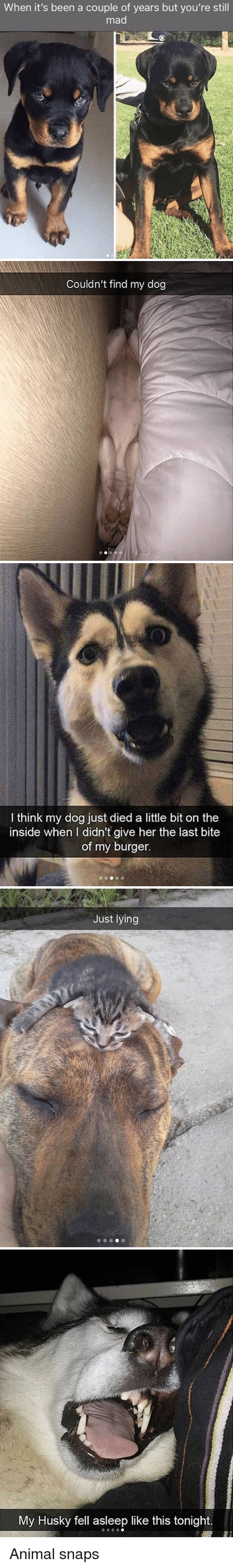 Still Mad: When it's been a couple of years but you're still  mad   Couldn't find my dog   I think my dog just died a little bit on the  inside when I didn't give her the last bite  of my burger.   Just lying   My Husky fell asleep like this tonight. Animal snaps