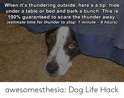 Life hack: When it's thundering outside, here's a tip: hide  under a table or bed and barka bunch. This is  100% guaranteed to scare the thunder away.  (estimate time for thunder to stop: 1 minute-8 hours) awesomesthesia:  Dog Life Hack