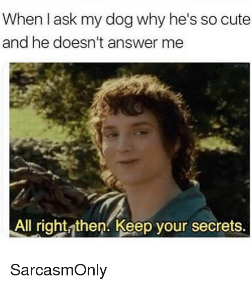 Cute, Funny, and Memes: When l ask my dog why he's so cute  and he doesn't answer me  All right then. Keep your secrets. SarcasmOnly