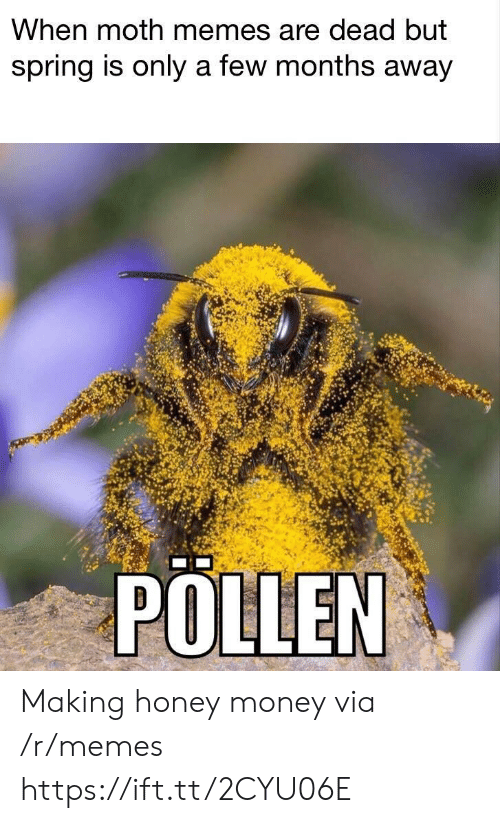 pollen: When moth memes are dead but  spring is only a few months away  POLLEN Making honey money via /r/memes https://ift.tt/2CYU06E