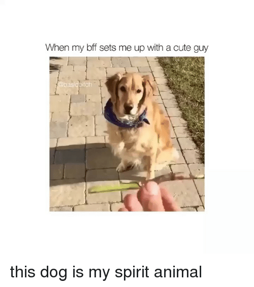 Cute, Animal, and Spirit: When my bff sets me up with a cute guy  baslobitch this dog is my spirit animal