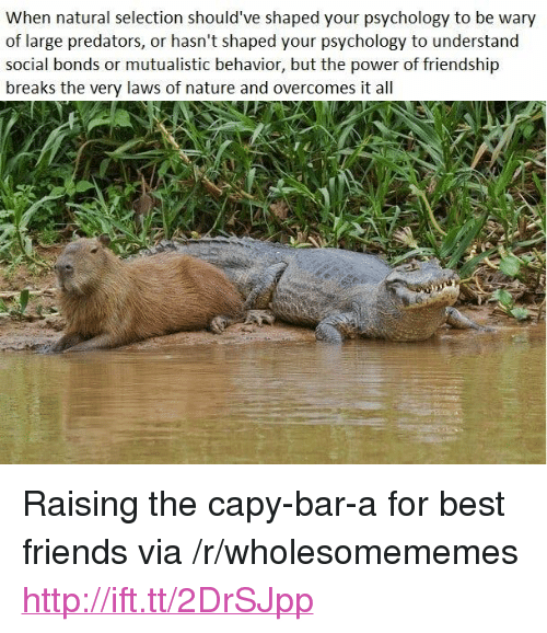 "Friends, Best, and Http: When natural selection should've shaped your psychology to be wary  of large predators, or hasn't shaped your psychology to understand  social bonds or mutualistic behavior, but the power of friendship  breaks the very laws of nature and overcomes it all <p>Raising the capy-bar-a for best friends via /r/wholesomememes <a href=""http://ift.tt/2DrSJpp"">http://ift.tt/2DrSJpp</a></p>"