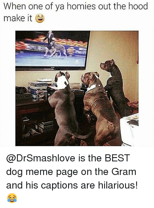 Dog Meme: When one of ya homies out the hood  make it @DrSmashlove is the BEST dog meme page on the Gram and his captions are hilarious! 😂
