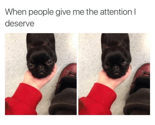 People, Give Me, and Attention: When people give me the attention I  deserve