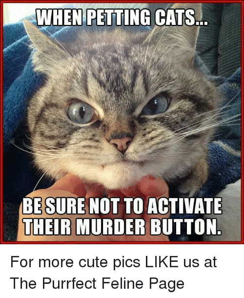 Petting Cat: WHEN PETTING  CATS..  BE SURE NOT TO ACTIVATE  THEIR MURDER BUTTON For more cute pics LIKE us at The Purrfect Feline Page
