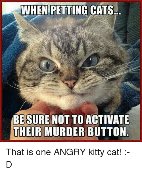 Petting Cat: WHEN PETTING  CATS  BESURE NOT TO ACTIVATE  THEIR MURDER BUTTON That is one ANGRY kitty cat! :-D