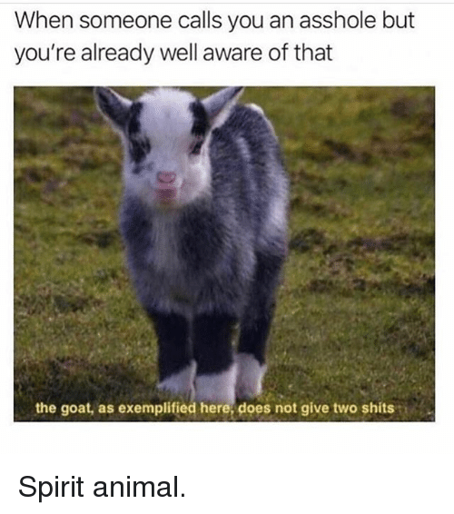 Memes, Goat, and Animal: When someone calls you an asshole but  you're already well aware of that  the goat, as exemplified here, does not give two shits Spirit animal.