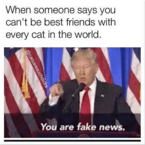 Fake, Friends, and News: When someone says you  can't be best friends with  every cat in the world.  You are fake news.  aresuchdicks
