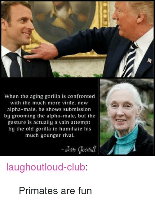 """humiliate: When the aging gorilla is confronted  with the much more virile, new  alpha-male, he shows submission  by grooming the alpha-male, but the  gesture is actually a vain attempt  by the old gorilla to humiliate his  much younger rival <p><a href=""""http://laughoutloud-club.tumblr.com/post/173410653844/primates-are-fun"""" class=""""tumblr_blog"""">laughoutloud-club</a>:</p>  <blockquote><p>Primates are fun</p></blockquote>"""