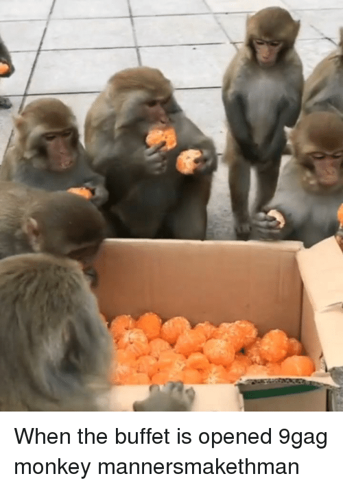 9gag, Memes, and Monkey: When the buffet is opened 9gag monkey mannersmakethman