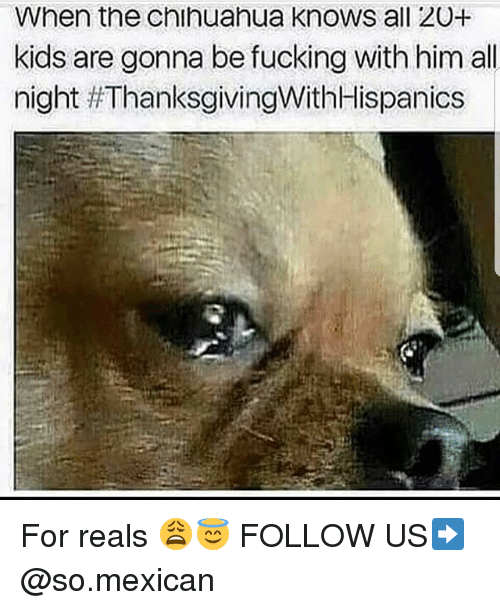 For Reals: When the chihuahua knows all 20+  kids are gonna be fucking with him all  night For reals 😩😇 FOLLOW US➡️ @so.mexican