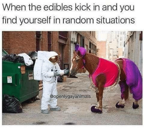 Random, Kick, and You: When the edibles kick in and you  find yourself in random situations  openlygayanimats