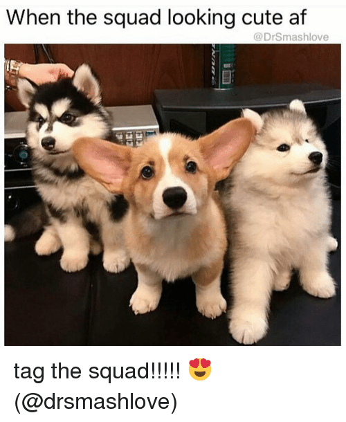 Af, Cute, and Memes: When the squad looking cute af  @DrSmashlove tag the squad!!!!! 😍 (@drsmashlove)