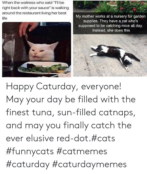 "Cats, Caturday, and Life: When the waitress who said ""Il be  right back with your sauce"" is walking  around the restaurant living her best  My mother works at a nursery for garden  supplies. They have a cat who's  supposed to be catching mice all day.  Instead, she does this  life  MasiPopa Happy Caturday, everyone! May your day be filled with the finest tuna, sun-filled catnaps, and may you finally catch the ever elusive red-dot.#cats #funnycats #catmemes #caturday #caturdaymemes"