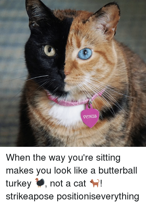 Memes, Turkey, and 🤖: When the way you're sitting makes you look like a butterball turkey 🦃, not a cat 🐈! strikeapose positioniseverything