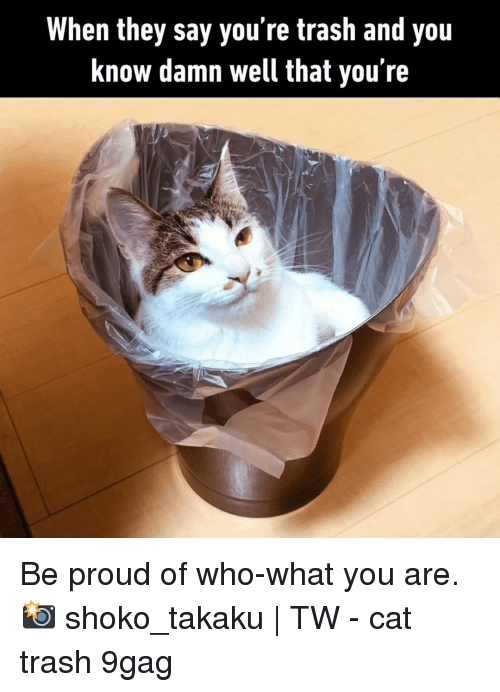 9gag, Memes, and Trash: When they say you're trash and you  know damn well that you're Be proud of who-what you are.⠀ 📸 shoko_takaku | TW⠀ -⠀ cat trash 9gag