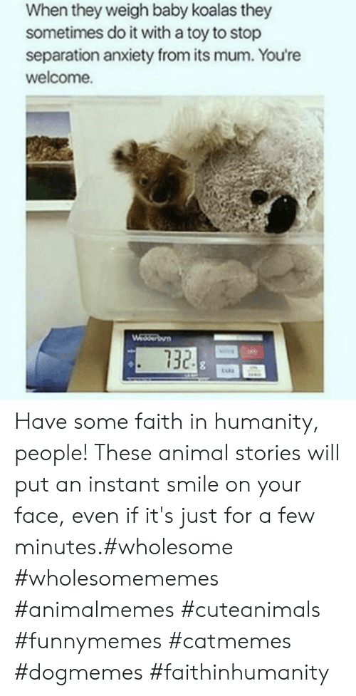 Animal, Anxiety, and Smile: When they weigh baby koalas they  sometimes do it with a toy to stop  separation anxiety from its mum. You're  welcome.  Wedserbun  732 Have some faith in humanity, people! These animal stories will put an instant smile on your face, even if it's just for a few minutes.#wholesome #wholesomememes #animalmemes #cuteanimals #funnymemes #catmemes #dogmemes #faithinhumanity