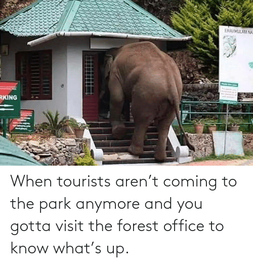the forest: When tourists aren't coming to the park anymore and you gotta visit the forest office to know what's up.