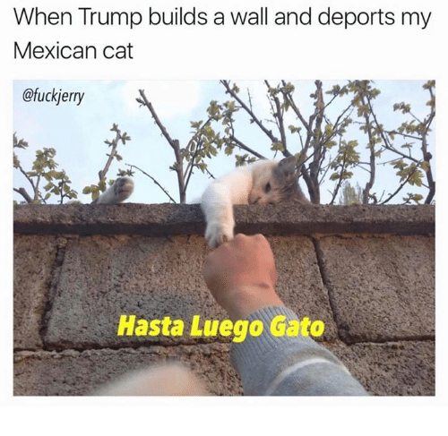 Trump Build A Wall: When Trump builds a wall and deports my  Mexican cat  @fuckjerry  Hasta Luego Gato