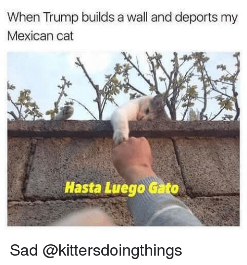 Trump Build A Wall: When Trump builds a wall and deports my  Mexican cat  Hasta Luego Gato Sad @kittersdoingthings