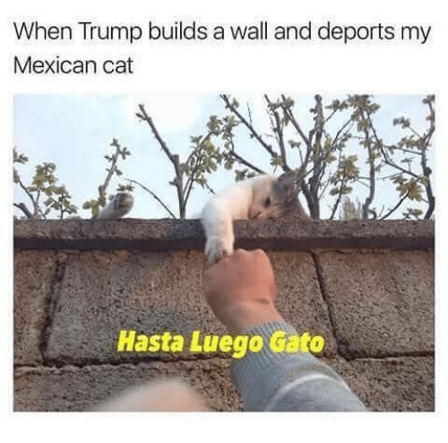 Trump Build A Wall: When Trump builds a wall and deports my  Mexican cat  Hasta Luego Gato