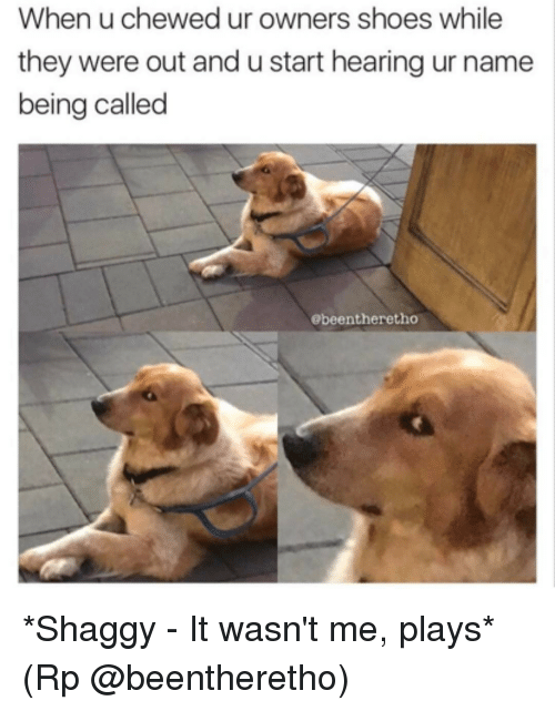 shaggy it wasnt me: When u chewed ur owners shoes while  they were out and u start hearing ur name  being called  Obeentheretho *Shaggy - It wasn't me, plays* (Rp @beentheretho)