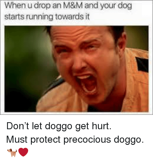 Running, Doggo, and Dog: When u drop an M&M and your dog  starts running towards it <p>Don't let doggo get hurt.<br/> Must protect precocious doggo.<br/> 🐕❤</p>