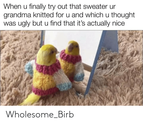 birb: When u finally try out that sweater ur  grandma knitted for u and which u thought  was ugly but u find that it's actually nice Wholesome_Birb