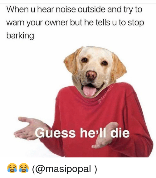 Funny, Guess, and Hell: When u hear noise outside and try to  warn your owner but he tells u to stop  barking  Guess he'll die 😂😂 (@masipopal )