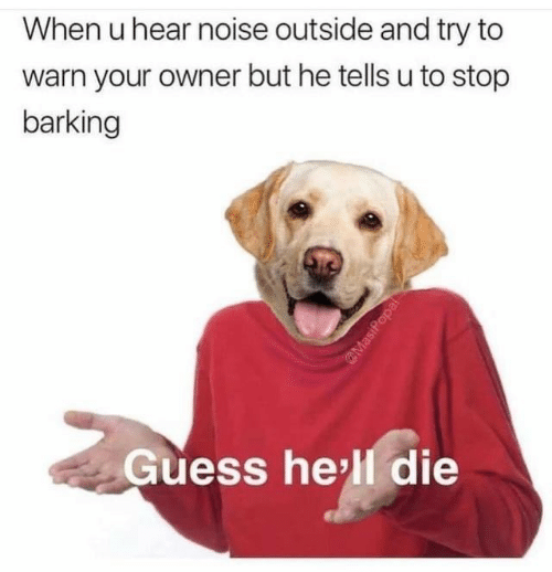 Guess, Hell, and Noise: When u hear noise outside and try to  warn your owner but he tellsu to stop  barking  Guess hell die  MasiPopal