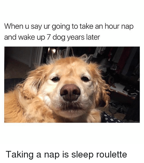 dog years: When u say ur going to take an hour nap  and wake up 7 dog years later Taking a nap is sleep roulette