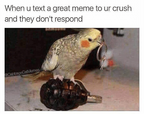Great Meme: When u text a great meme to ur crush  and they don't respond  @CabbageCatMemes