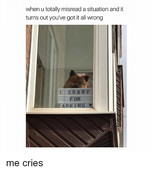 youve-got-it: when u totally misread a situation and it  turns out you've got it all wrong  SORRY  F OR  BARK ING me cries