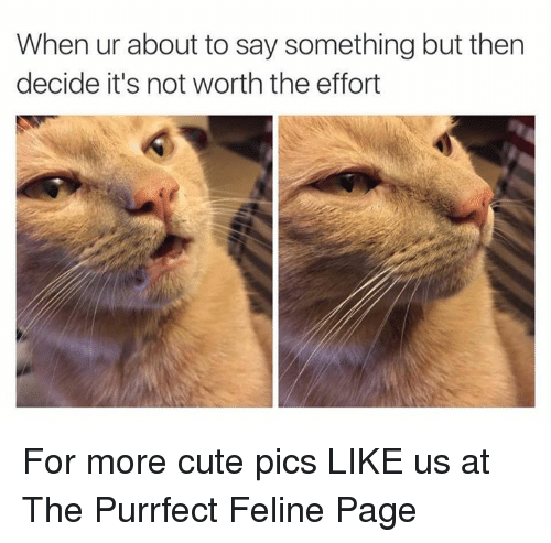 About To Say Something: When ur about to say something but then  decide it's not worth the effort For more cute pics LIKE us at The Purrfect Feline Page