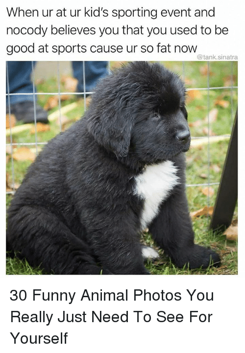 Funny, Sports, and Animal: When ur at ur kid's sporting event and  nocody believes you that you used to be  good at sports cause ur so fat now  @tank.sinatra 30 Funny Animal Photos You Really Just Need To See For Yourself