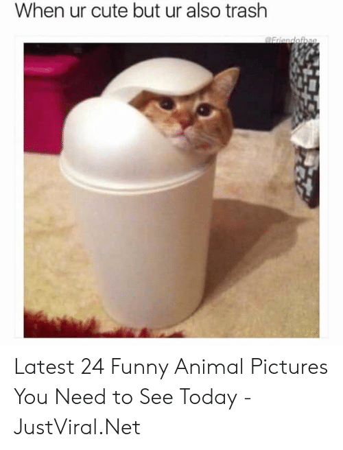 animal pictures: When ur cute but ur also trash Latest 24 Funny Animal Pictures You Need to See Today - JustViral.Net
