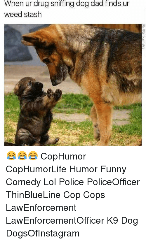 Stashe: When ur drug sniffing dog dad finds ur  weed stash 😂😂😂 CopHumor CopHumorLife Humor Funny Comedy Lol Police PoliceOfficer ThinBlueLine Cop Cops LawEnforcement LawEnforcementOfficer K9 Dog DogsOfInstagram