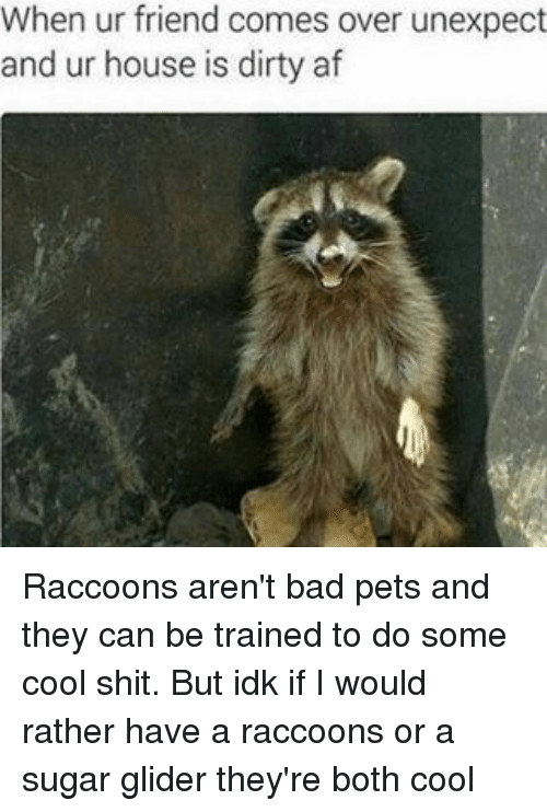 Unexpectancy: When ur friend comes over unexpect  and ur house is dirty af Raccoons aren't bad pets and they can be trained to do some cool shit. But idk if I would rather have a raccoons or a sugar glider they're both cool